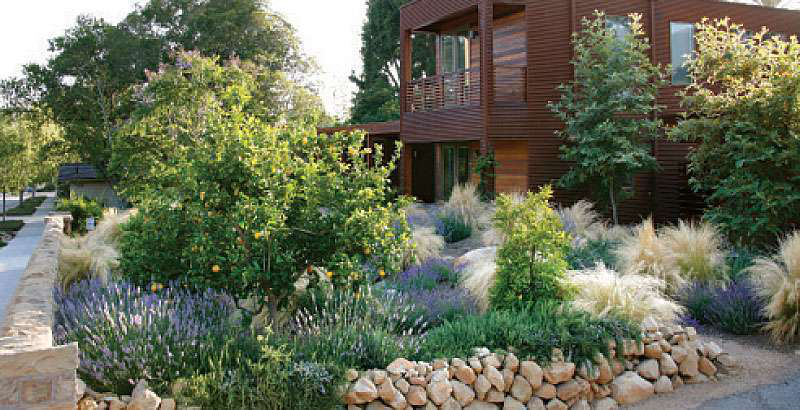 Ornamental grasses become go to plant for landscapers for Ornamental grass front yard