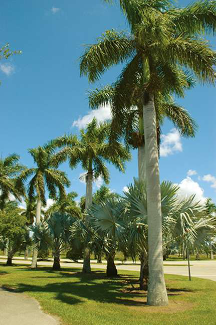 How To Care For Palm Trees