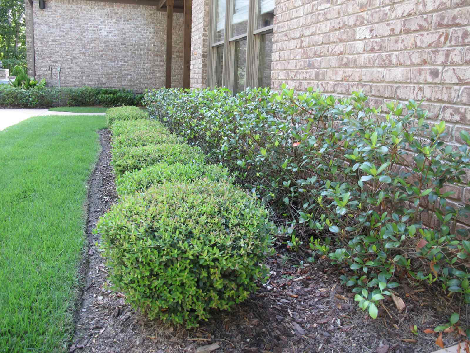 Natural safety systems for Great bushes for landscaping