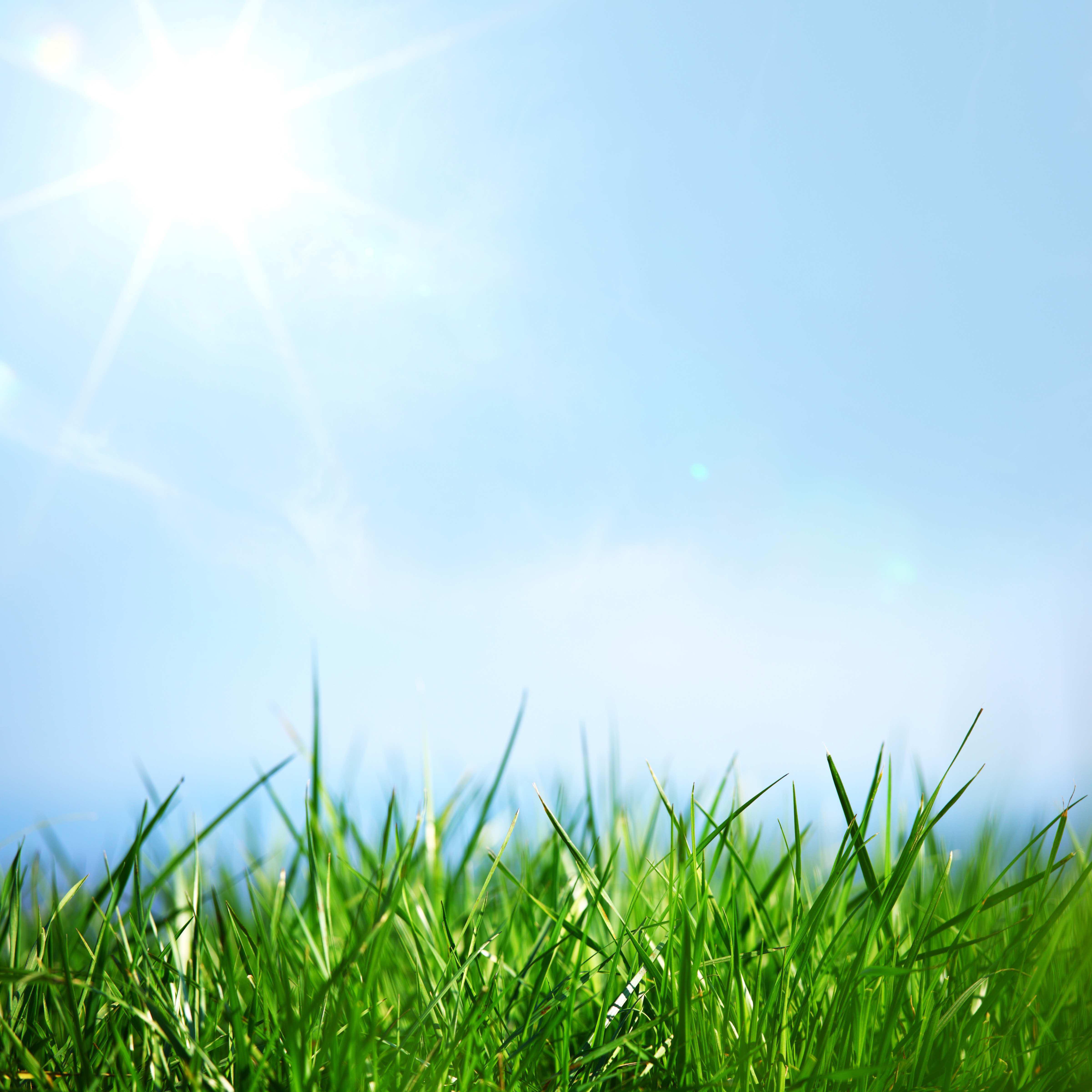 Grass Landscape Urban grass might be greener but is it greener shutterstock75234670 workwithnaturefo