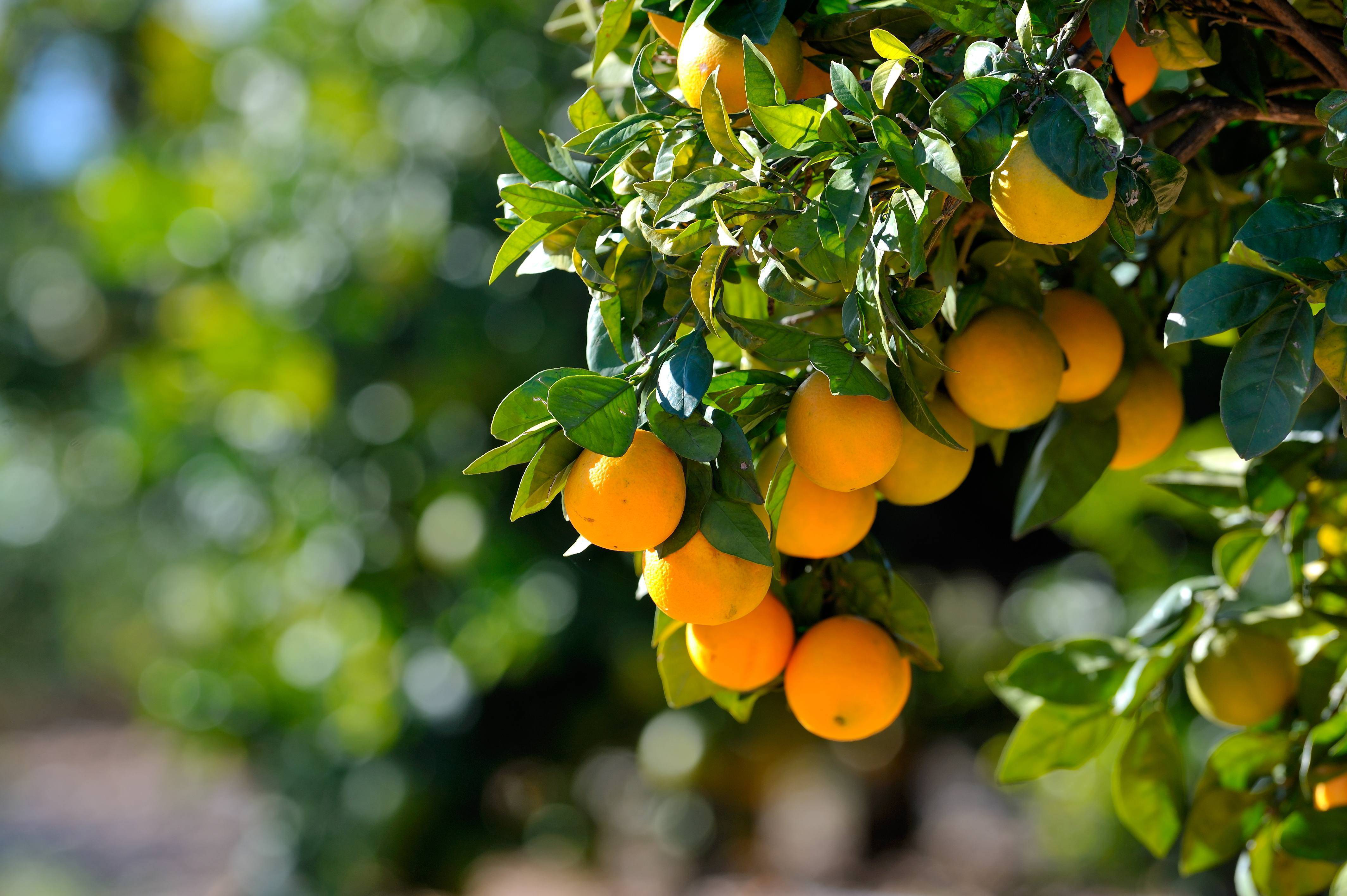 Branch out with trees for an edible landscape for Fruit trees