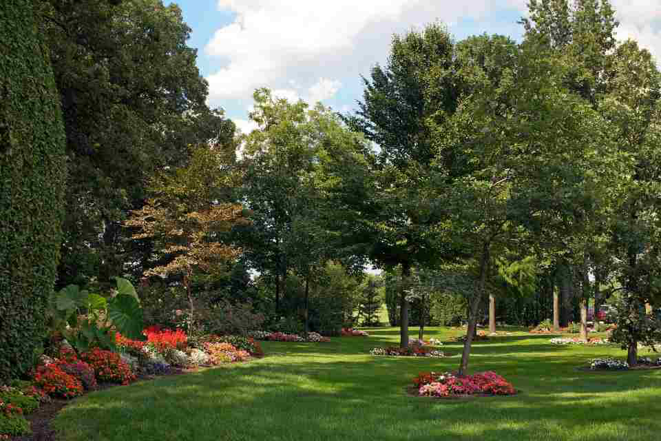 Don't Let Lawns Sizzle This Summer