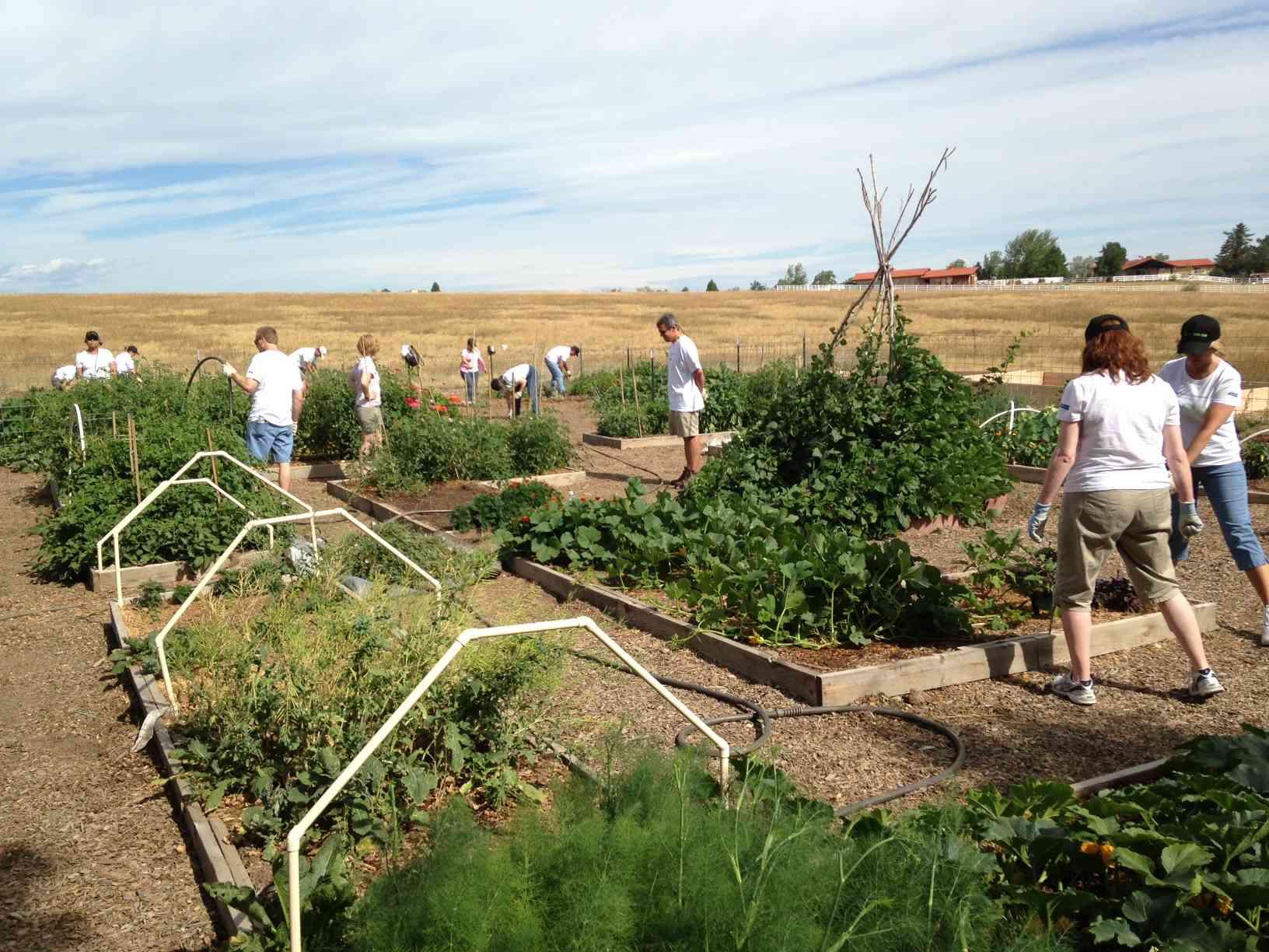 Tlc Garden Center Raised Bed Gardening Tlc Garden Centers