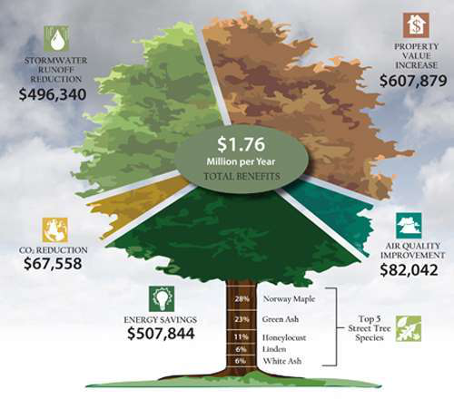 How Much Are Trees Really Worth?