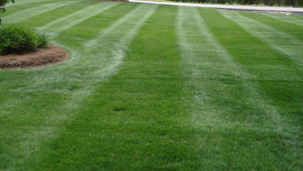Less is More with Fall Fertilization