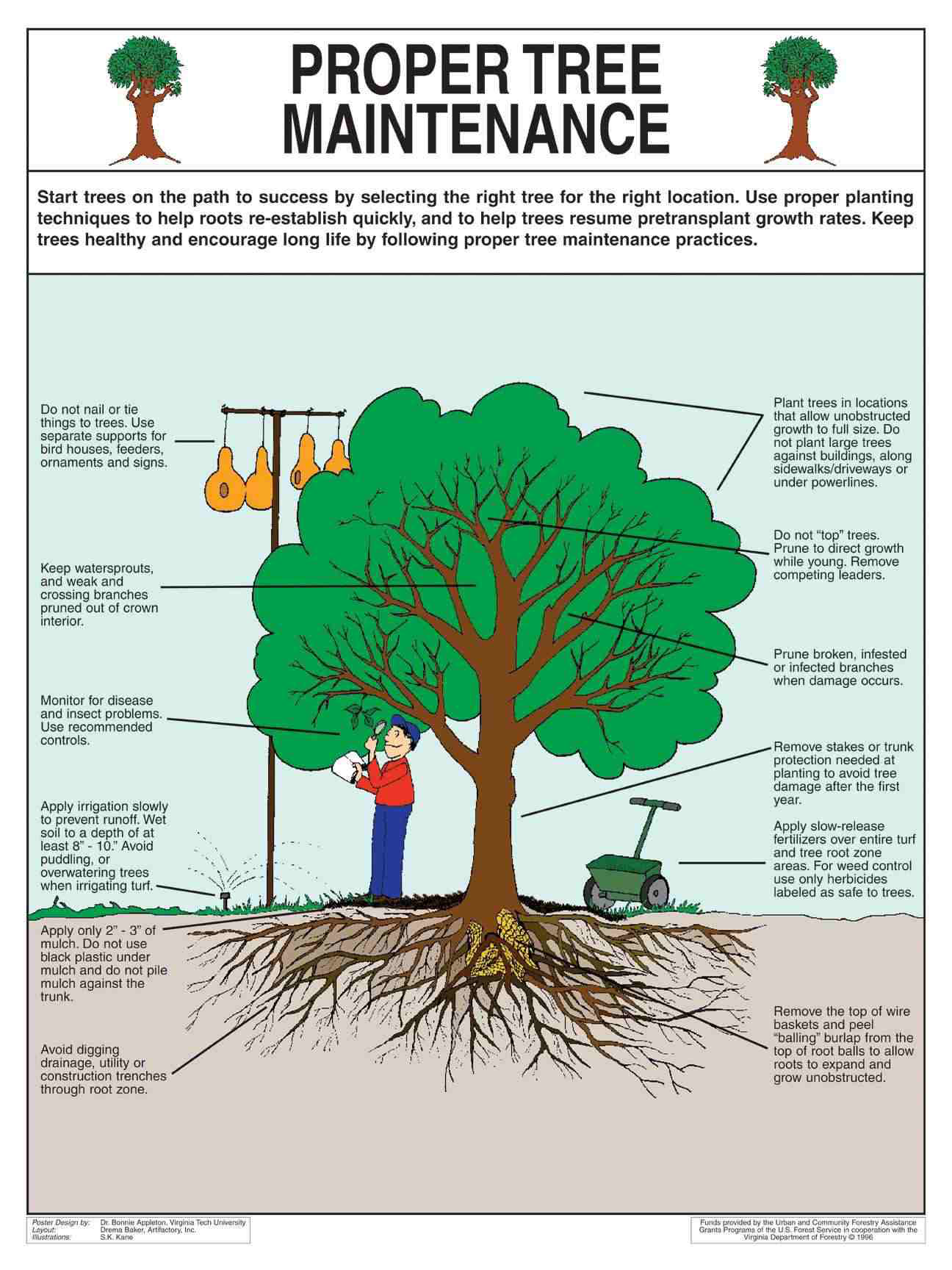 How To Keep Trees Healthy