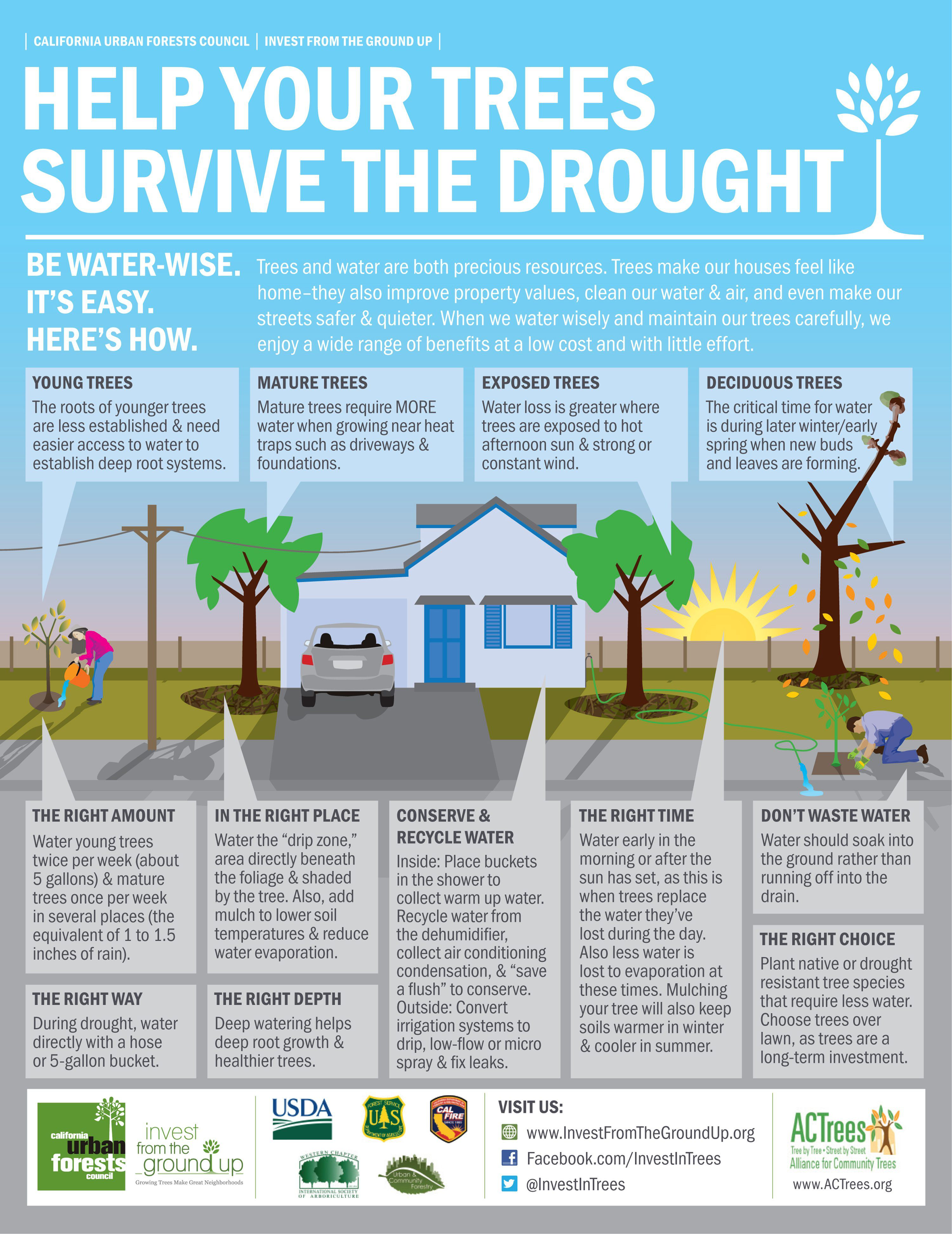 Tips to Help Trees Survive Drought