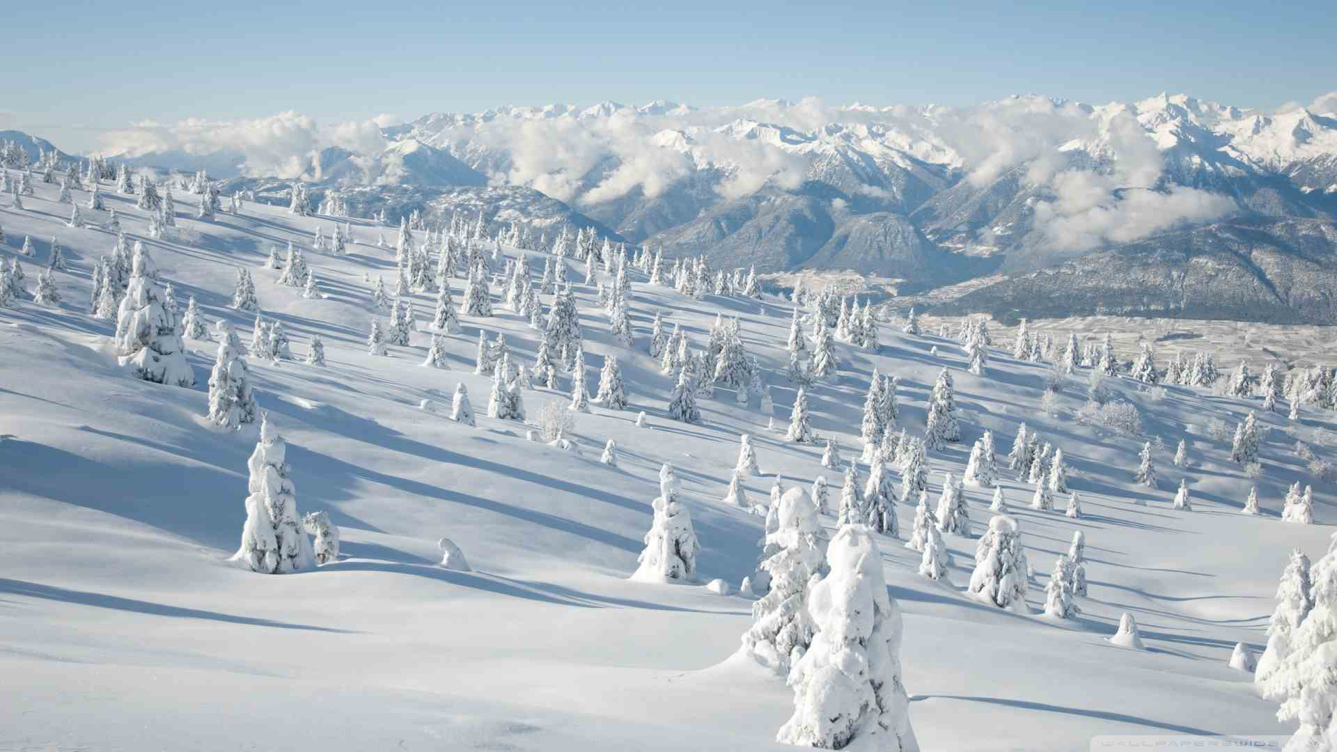 Beautiful winter landscape with snow covered trees | Stock Photo ...
