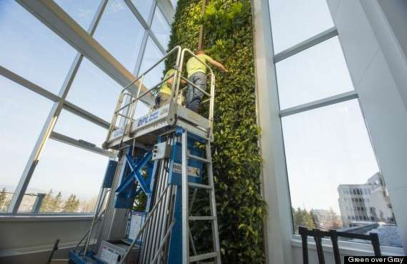 World's Tallest Living Wall Features 10,000 Individual Plants