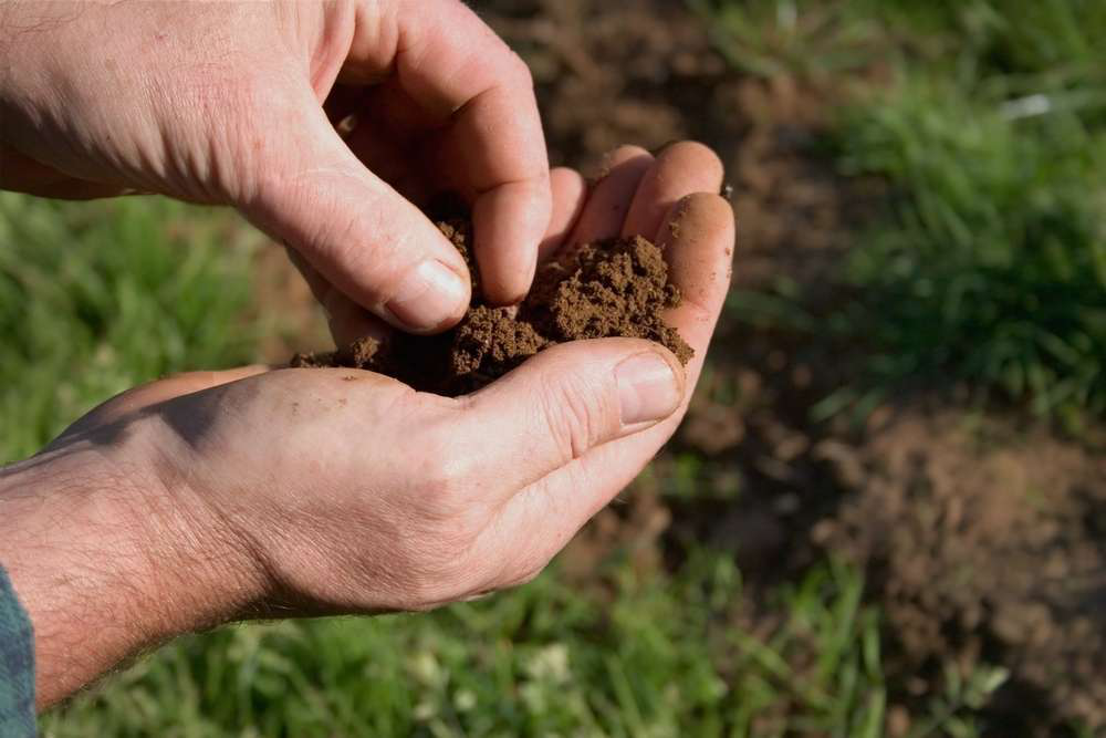 Why Testing Soil pH is Important