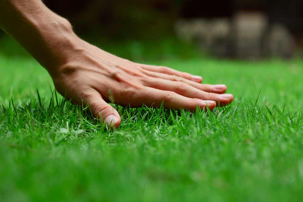 4 Ways to Keep Lawns Looking Green