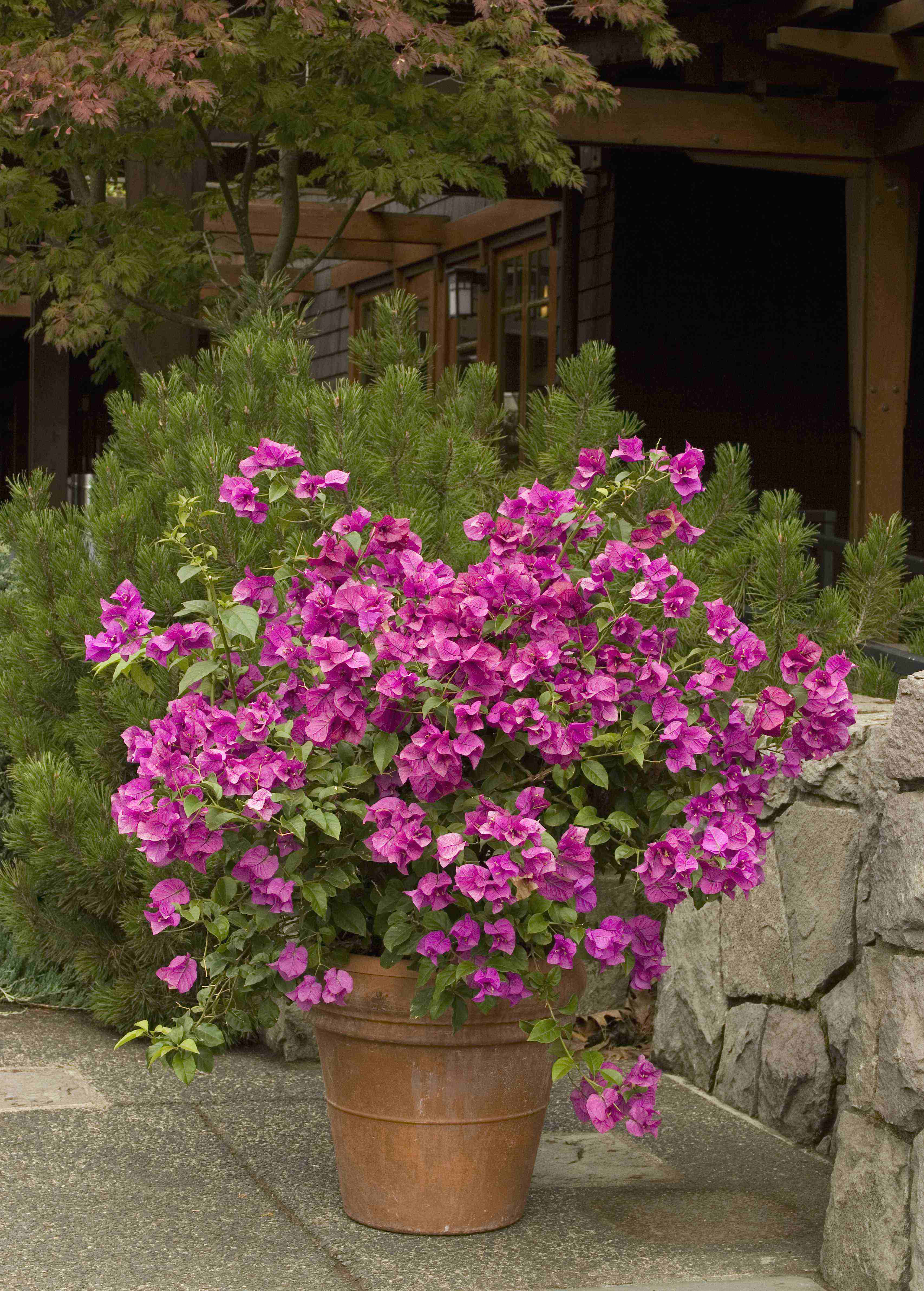 Evergreens flowers and shrubs perfect for planting on hillsides flowering monrovia dhlflorist Choice Image