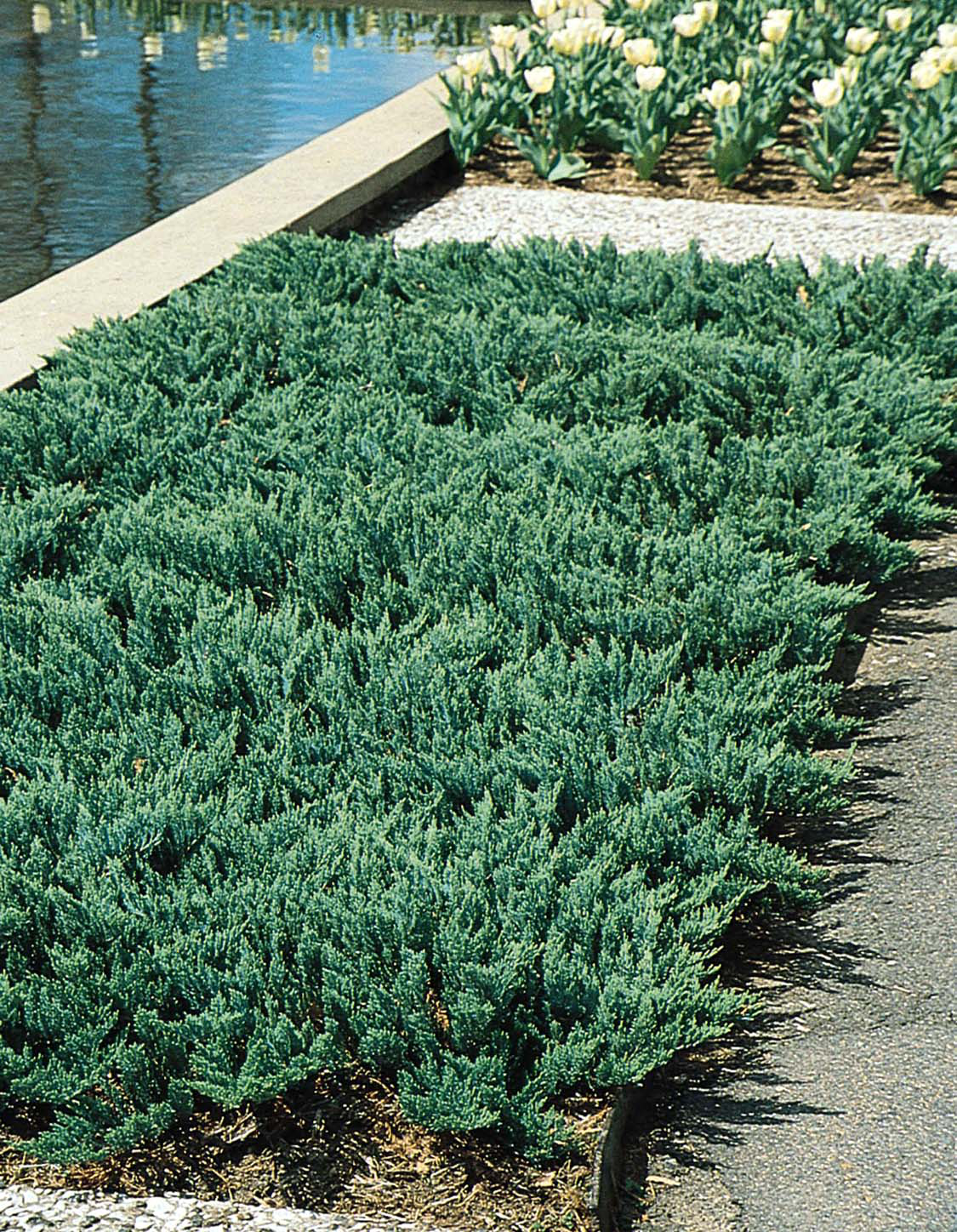 Evergreens Flowers And Shrubs Perfect For Planting On