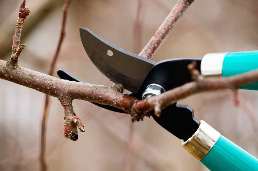 Proper pruning techniques, tips for landscapers