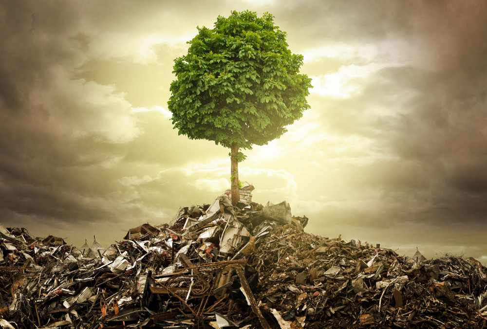 How sustainability helps your business thrive