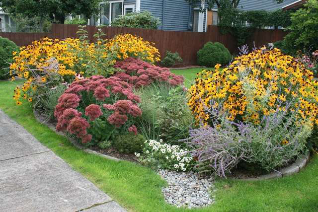 hardy perennials add a splash of color to this rain garden photo courtesy of