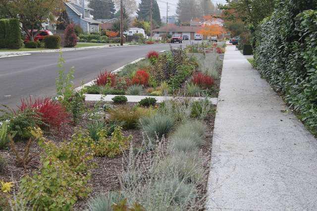 Design/build: Build a rain garden