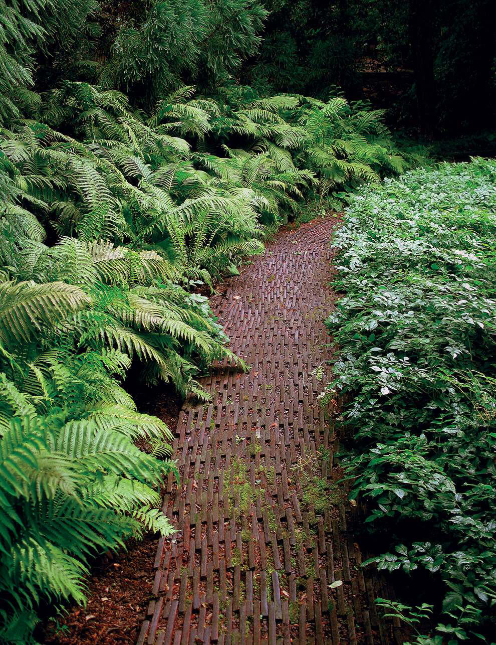 Fern Garden Ideas Help your landscaping clients make the most of shade the path through this shade garden is made of flat stone laid on its edge workwithnaturefo