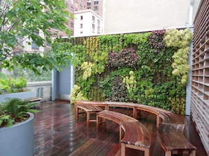 This living wall uses plants such as alchemilla, ajuga, epimedium, and huechera to serve as a backdrop for an outdoor classroom space in an urban setting.  Photo: Trevor Smith, Land Escapes Design
