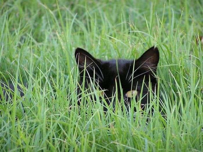 cat-grass-attackofthecute.com_
