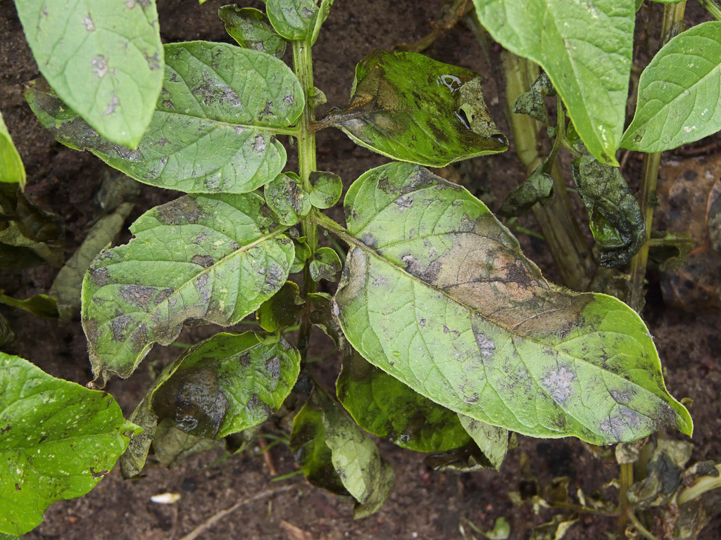 Recent research illustrates importance of rotating fungicides