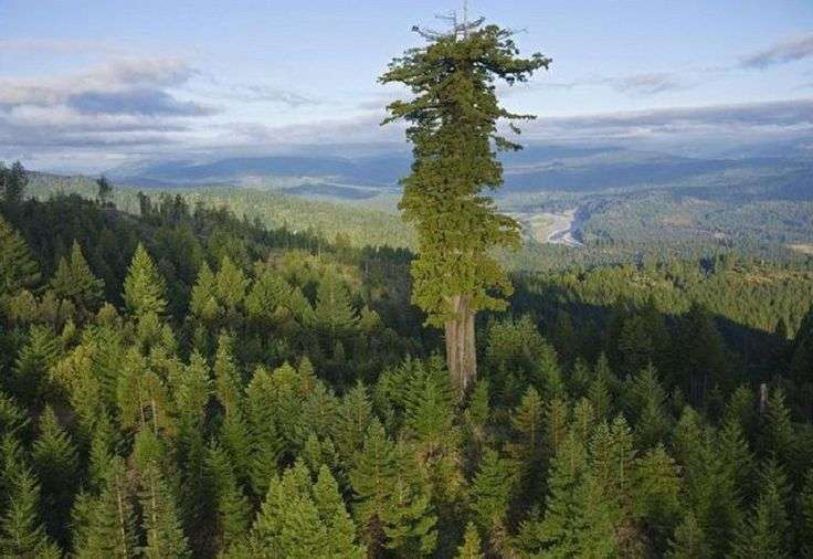 Famous trees across America's national parks