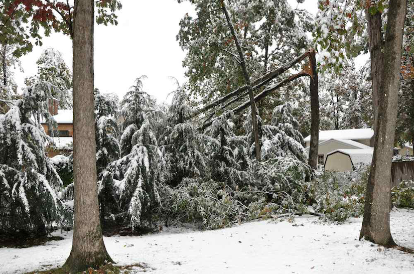 Heavy winter snow can be too much of a burden for trees if not properly cared for.