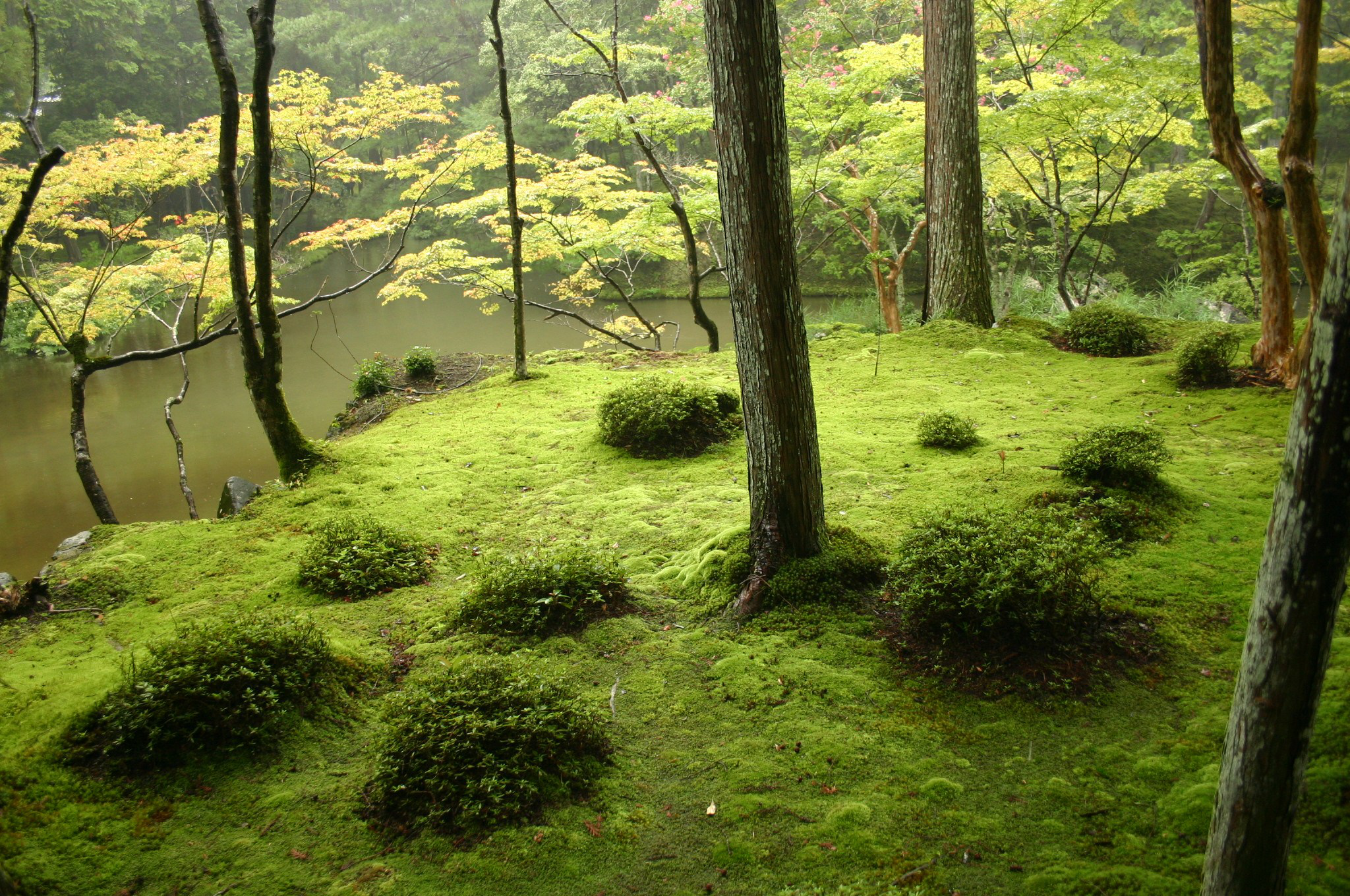 Moss Garden Things To Keep In Mind Total Landscape Care