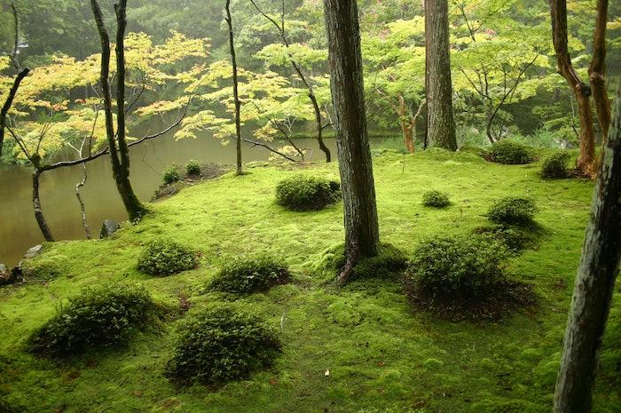 moss garden saiho-ji – Ivanoff~commonswiki