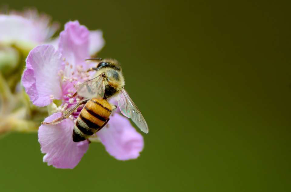 Neonicotinoid ban stalls in Illinois, moves forward abroad