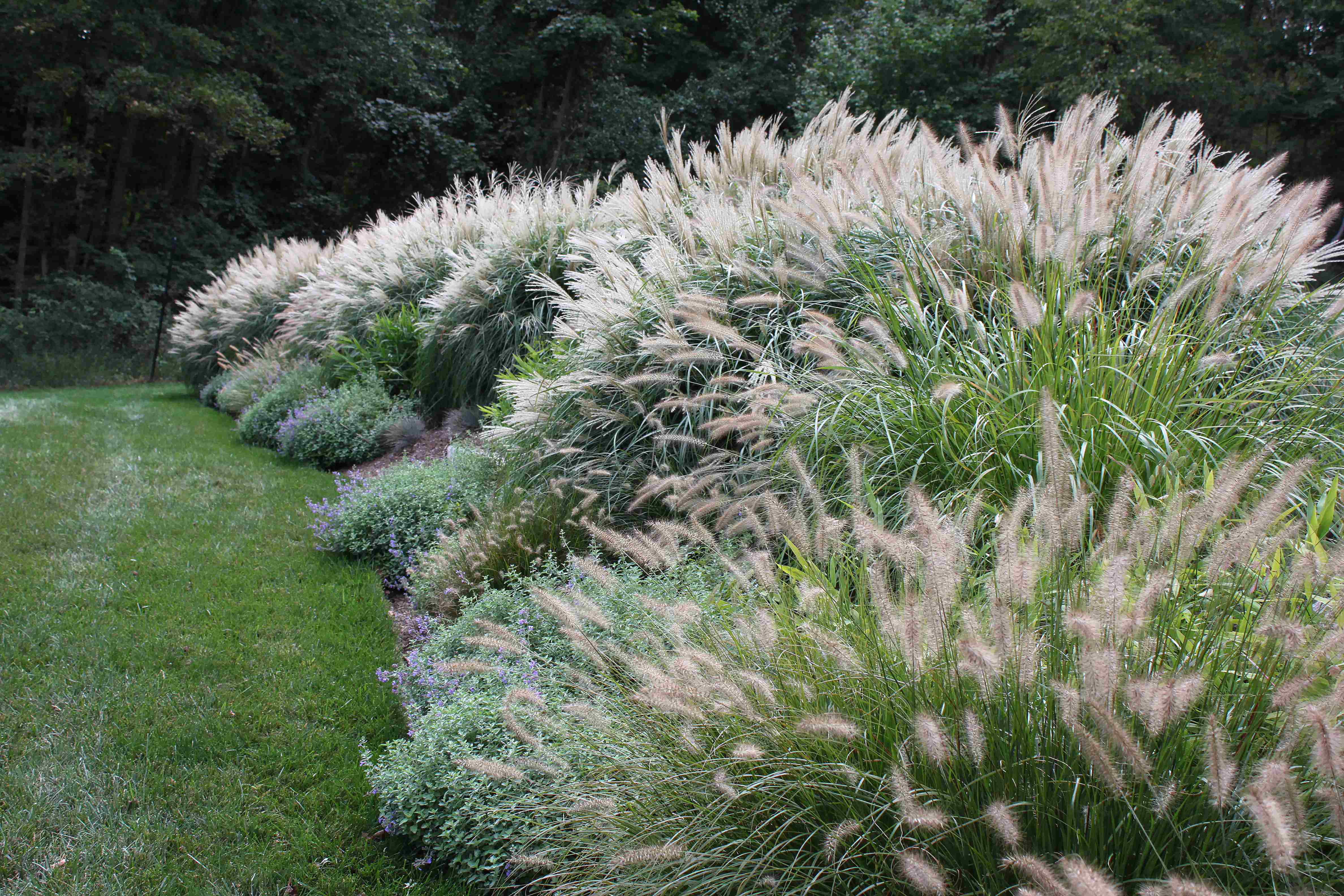 How to select ornamental foliage for privacy screens for Tall ornamental grasses for screening