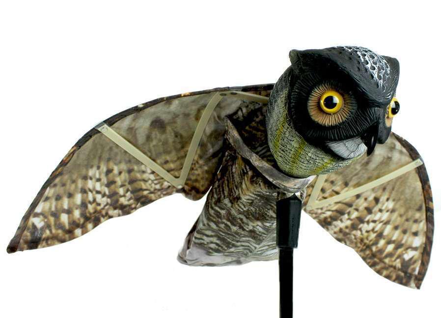 How-To: Design landscapes for humane bird, pest control