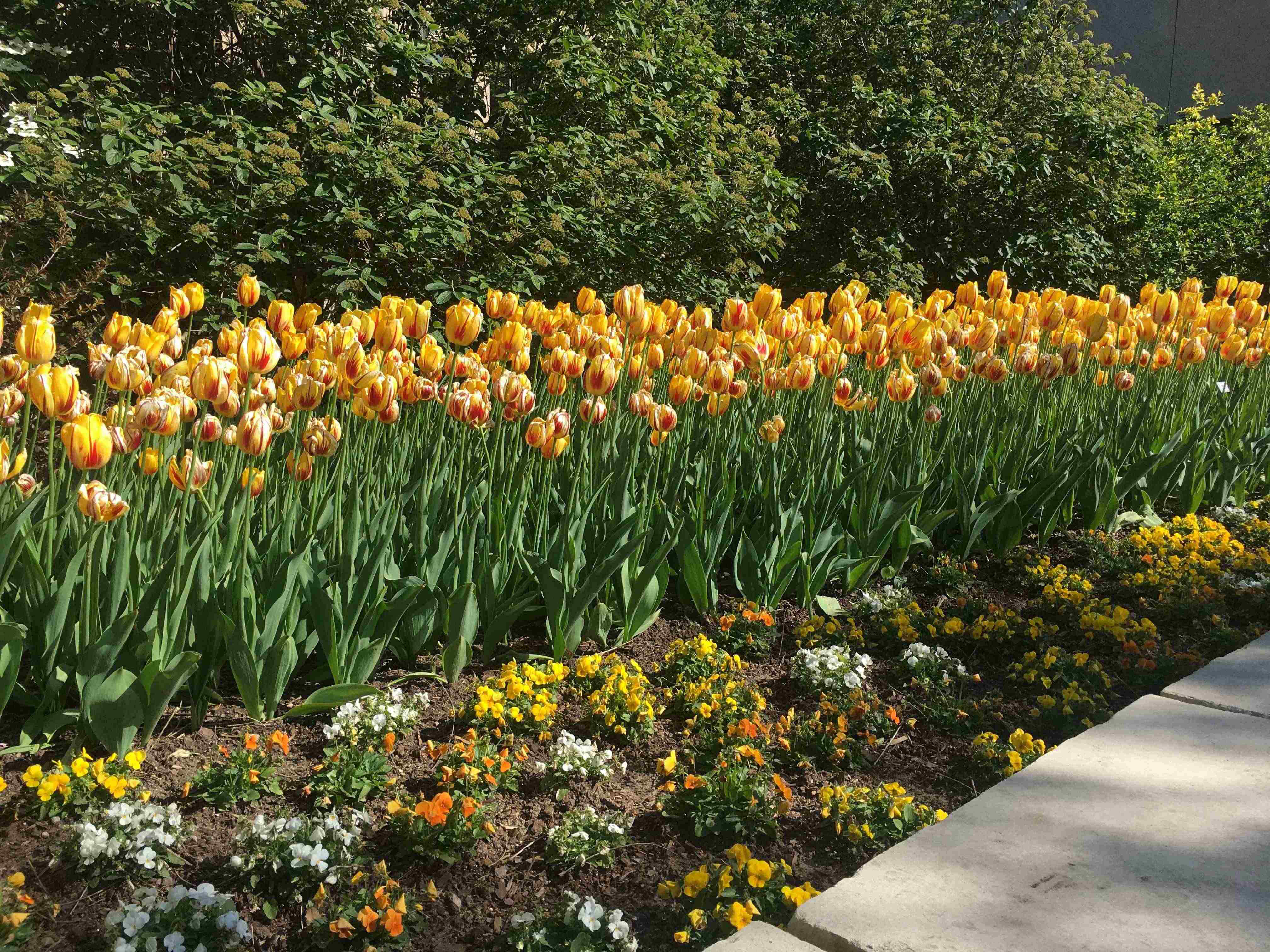 How to choose the best colors to add to your landscape