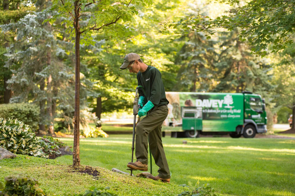 Tree care often demands patience for case-by-case study