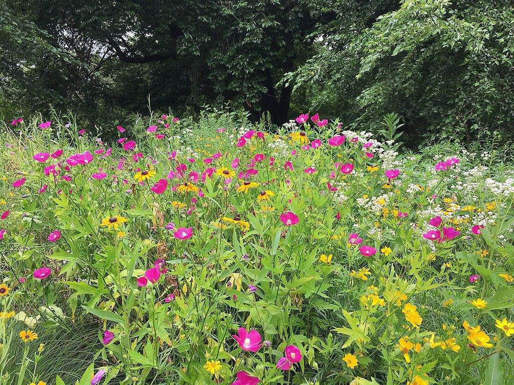 How to create a wild landscape without it looking like weeds for Less maintenance plants