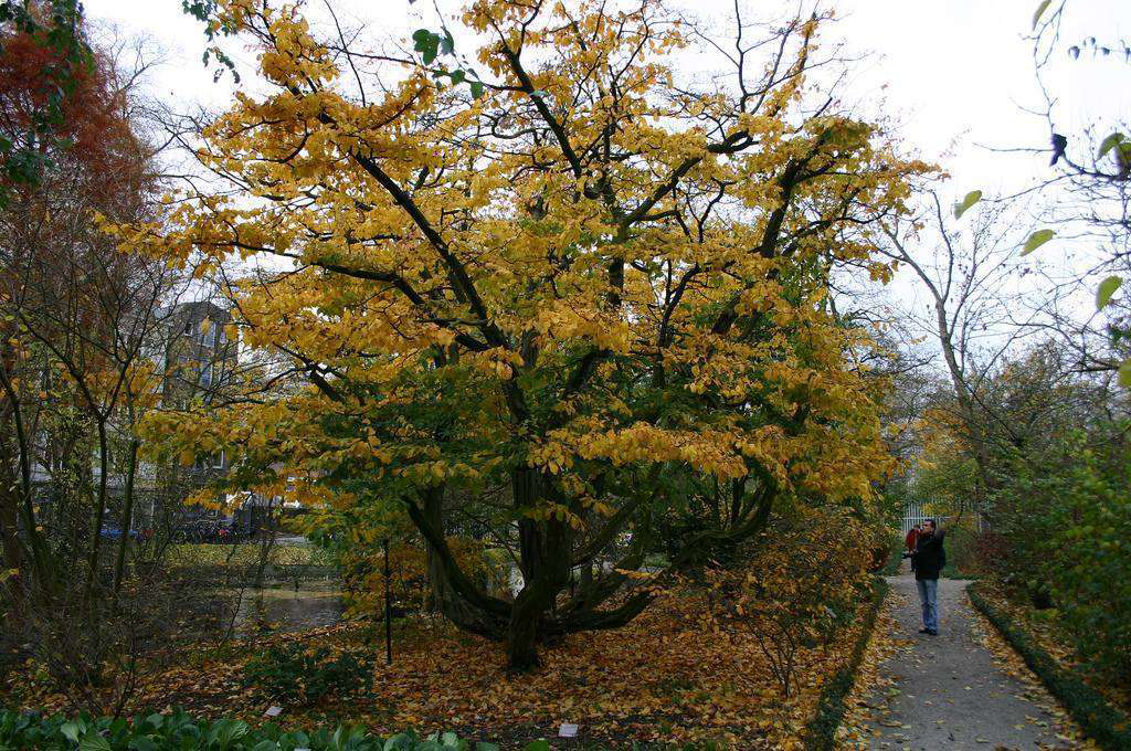 7 trees that look great in both the fall and the winter 7 trees that look great in both the fall and the winter