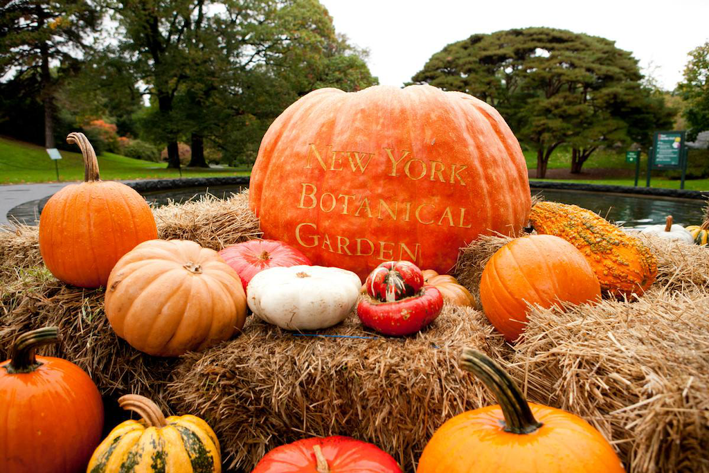Check out some of the world 39 s largest pumpkins at nybg - Botanic gardens pumpkin festival ...
