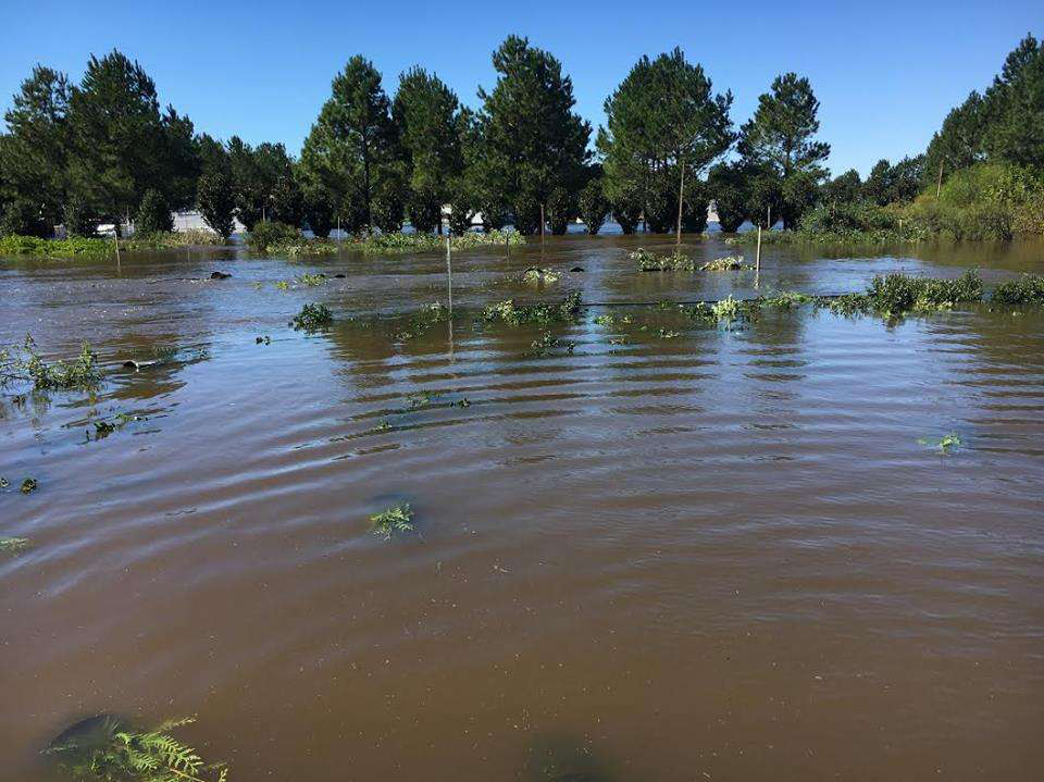 Hurricane Matthew Flooding. This Picture Of Nursery ...