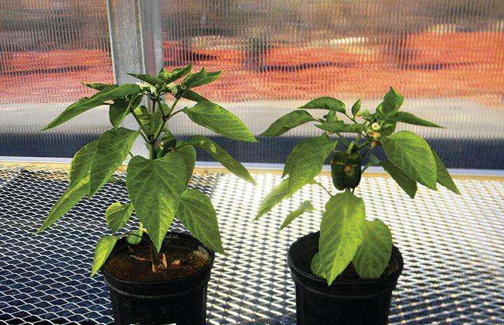 Profile Products: Porous ceramic conditioner improves soil structure