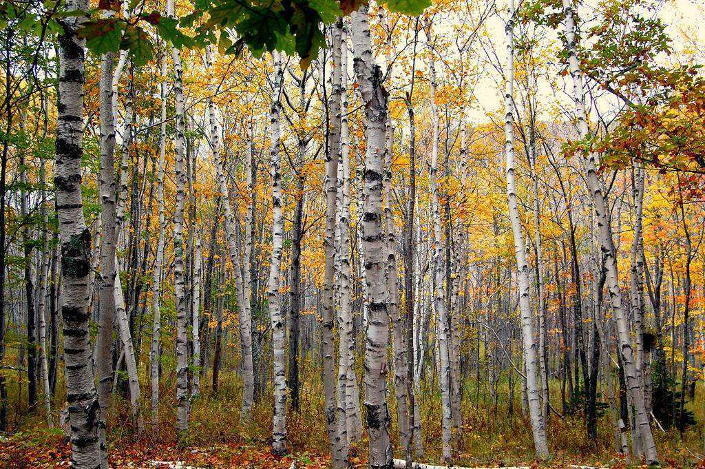 Choosing trees that provide seasonal interest in the fall and winter