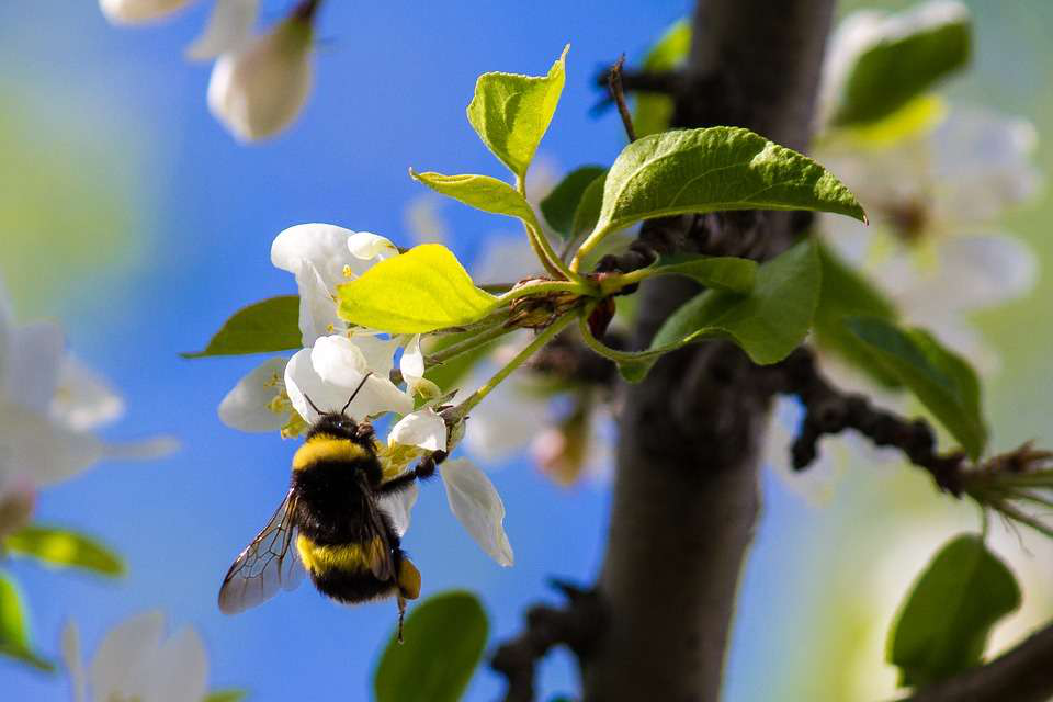 Tiny-brained bees don't just learn, they teach each other