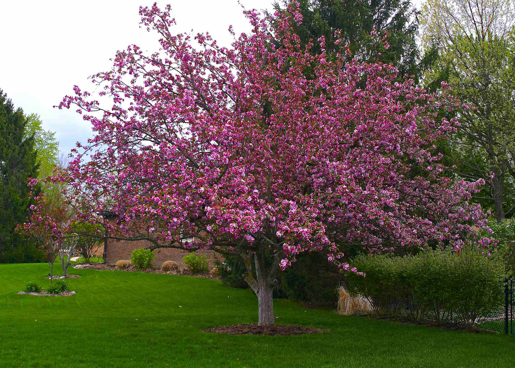 Instead of over-pruning, choose smaller trees to fit your site