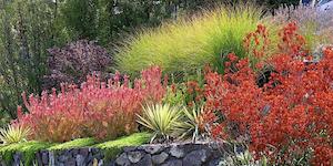 plant-variety-derviss-design