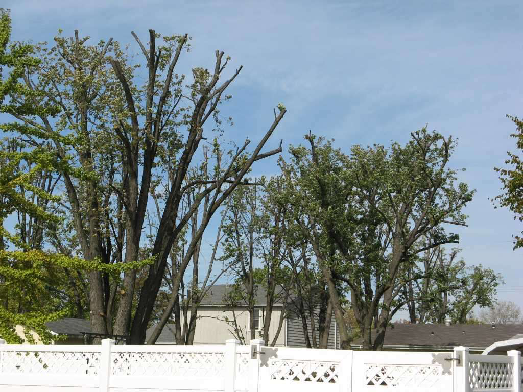 Tree topping is wrong, period, requiring years to repair