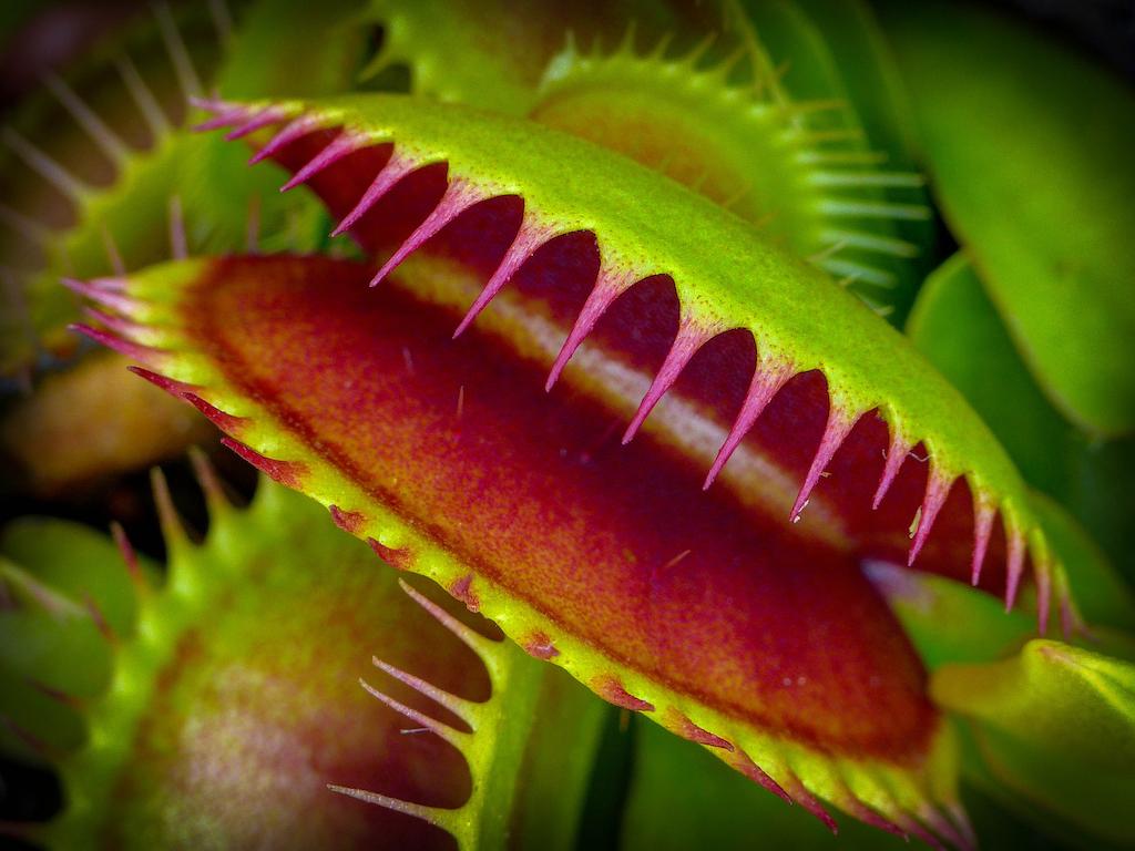 venus-flytrap-mark-freeth