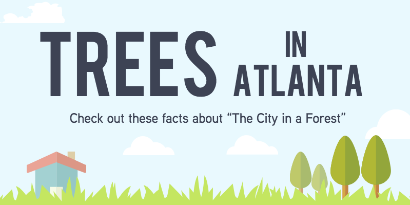 Trees in Atlanta Illustration and Infograph