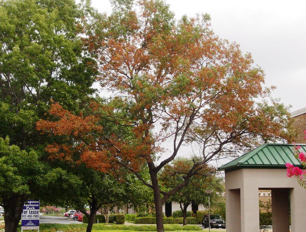 Oak Wilt Preservation Tree