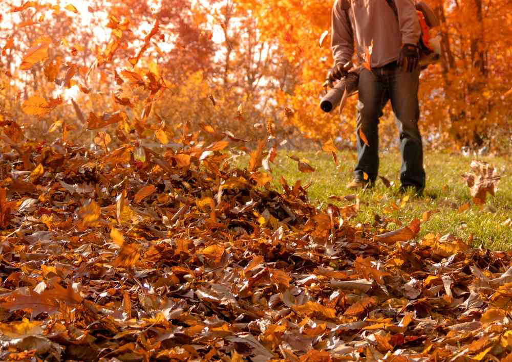 Man Blowing Leaves During the Fall