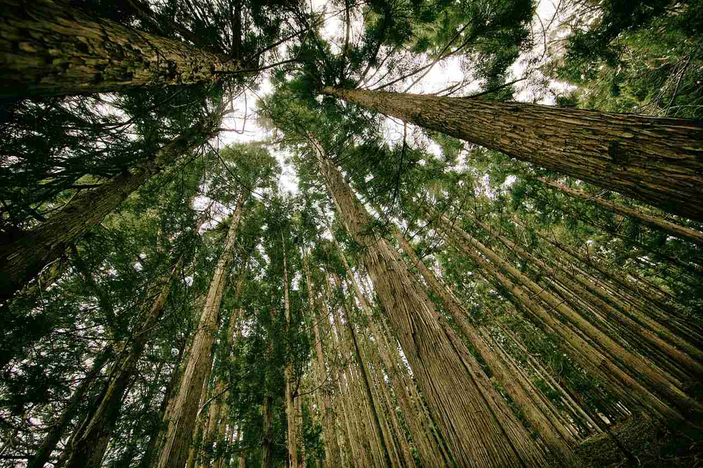What did one tree say to the other tree? Send carbon!
