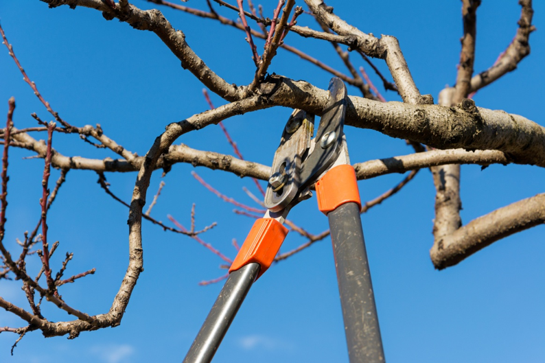 Time of the season: More expert advice on pruning trees